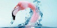 Экологически безопасные моющие средства Alive
